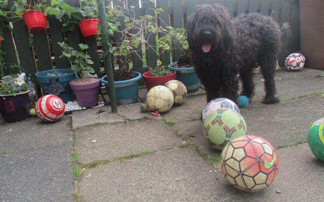 Elvis Doodle: Blog for Dogs – Balls