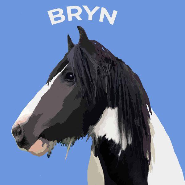pop art pony portrait